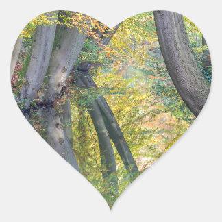 Pegatina En Forma De Corazón Los troncos de árbol de la caída con la reflexión