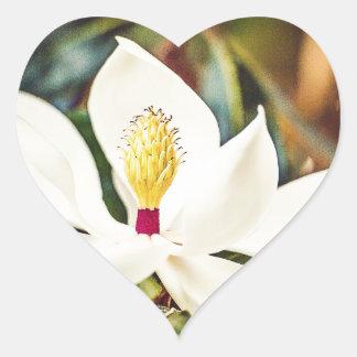 Pegatina En Forma De Corazón Magnolia en la floración