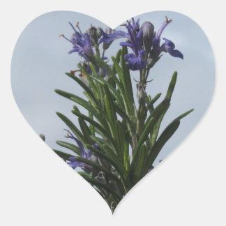 Pegatina En Forma De Corazón Planta de Rosemary con las flores contra el cielo