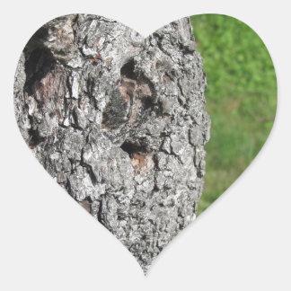 Pegatina En Forma De Corazón Tronco de peral contra fondo verde