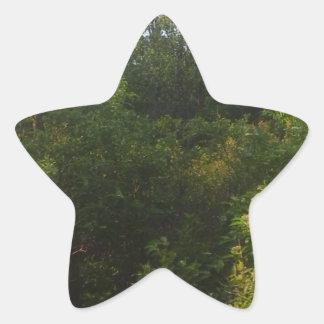 Pegatina En Forma De Estrella Amigos verdes