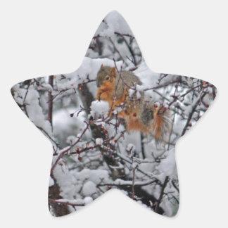 Pegatina En Forma De Estrella Ardilla en un árbol 6206 Nevado