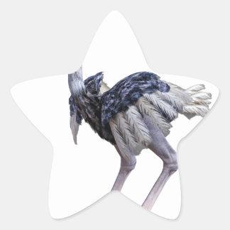 Pegatina En Forma De Estrella Avestruz