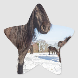 Pegatina En Forma De Estrella Caballos negros del frisian en nieve del invierno
