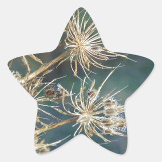 Pegatina En Forma De Estrella Cierre del cordón de la reina Anne para arriba