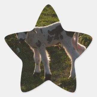 Pegatina En Forma De Estrella Cordero recién nacido