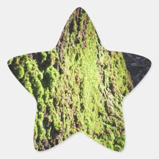 Pegatina En Forma De Estrella El musgo verde en el detalle de la naturaleza del