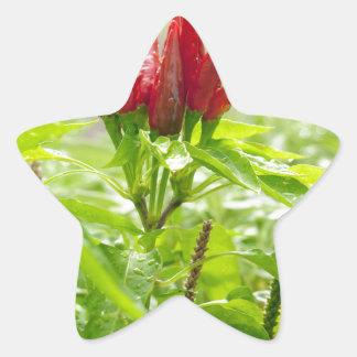 Pegatina En Forma De Estrella Flor del chile