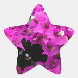 Pegatina En Forma De Estrella Fondo fucsia púrpura del Bougainvillea