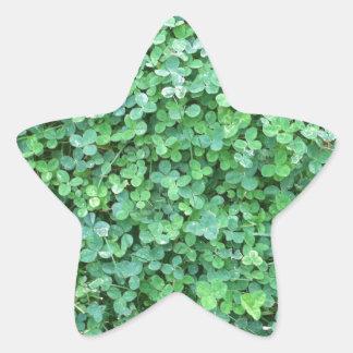 Pegatina En Forma De Estrella Foto verde de la naturaleza del trébol