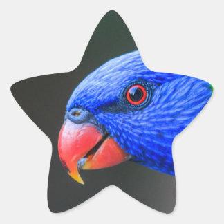 Pegatina En Forma De Estrella Fresco-Arco iris-Lorikeet-silkenphotography