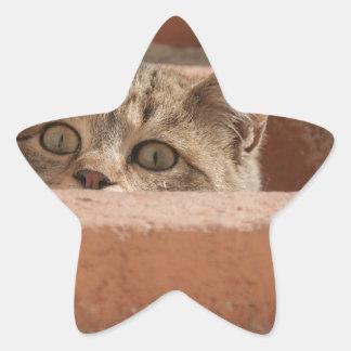 Pegatina En Forma De Estrella Gato montés joven curioso de la atención de los
