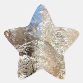 Pegatina En Forma De Estrella Hierba de pampa con un cielo azul soleado