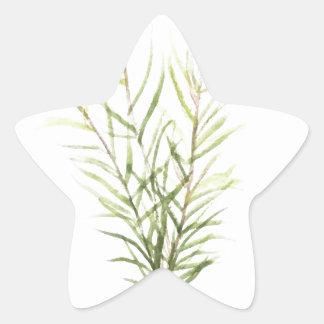 Pegatina En Forma De Estrella Hierbas de Rosemary