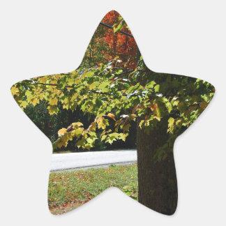 Pegatina En Forma De Estrella Hojas de otoño en Maine