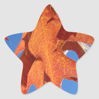 Pegatina En Forma De Estrella Hojas del roble rojo