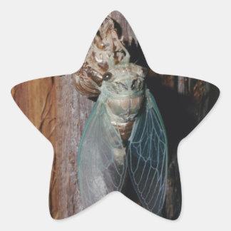 Pegatina En Forma De Estrella La cigarra seca sus alas
