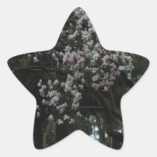 Pegatina En Forma De Estrella Magnolias para siempre
