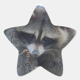 Pegatina En Forma De Estrella Mapache