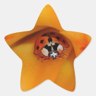 Pegatina En Forma De Estrella Mariquita