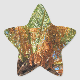 Pegatina En Forma De Estrella Palma datilera