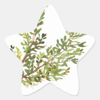 Pegatina En Forma De Estrella Pintura del watercolour de Rosemary de la hierba