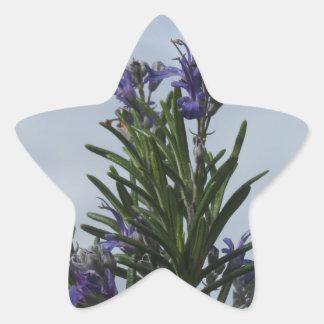 Pegatina En Forma De Estrella Planta de Rosemary con las flores contra el cielo