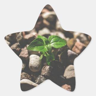 Pegatina En Forma De Estrella Planta frondosa verde que comienza a crecer en los