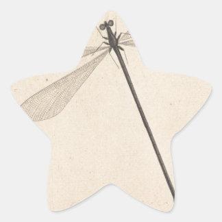 Pegatina En Forma De Estrella Una libélula, por Nicolás Struyk, temprano décimo