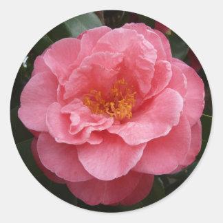 Pegatina floral de la foto de la camelia rosada