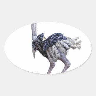 Pegatina Ovalada Avestruz