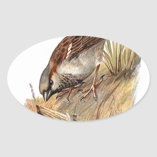 Pegatina Ovalada Familiar Wild Birds Swaysland Sparrow