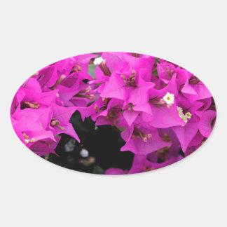 Pegatina Ovalada Fondo fucsia púrpura del Bougainvillea