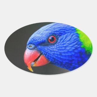Pegatina Ovalada Fresco-Arco iris-Lorikeet-silkenphotography