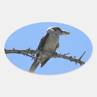 Pegatina Ovalada Kookaburra