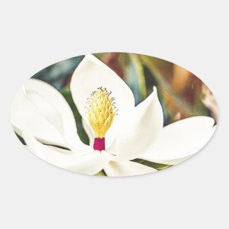 Pegatina Ovalada Magnolia en la floración