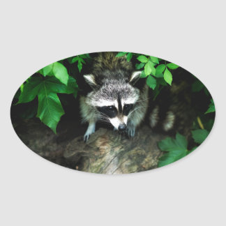 Pegatina Ovalada mapache