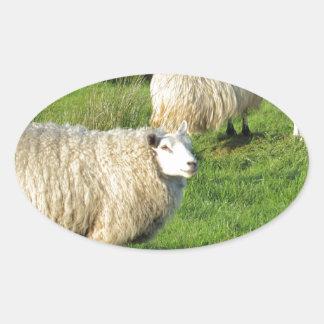Pegatina Ovalada Ovejas irlandesas