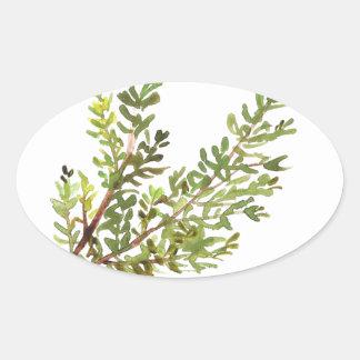 Pegatina Ovalada Pintura del watercolour de Rosemary de la hierba