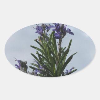 Pegatina Ovalada Planta de Rosemary con las flores contra el cielo