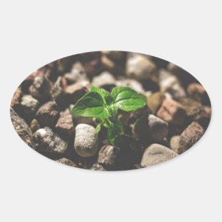 Pegatina Ovalada Planta frondosa verde que comienza a crecer en los