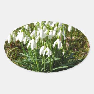 Pegatina Ovalada Snowdrops 02,2 (Schneegloeckchen)