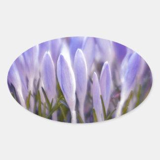 Pegatina Ovalada Ultra de azafrán Violetas