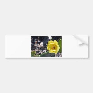 Pegatina Para Coche abeja iridiscente en la flor de los nopales
