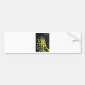 Pegatina Para Coche El musgo verde en el detalle de la naturaleza del