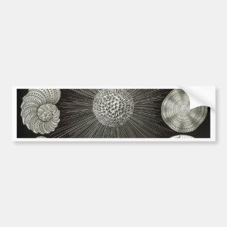 Pegatina Para Coche Ernst Haeckel Thalamphora