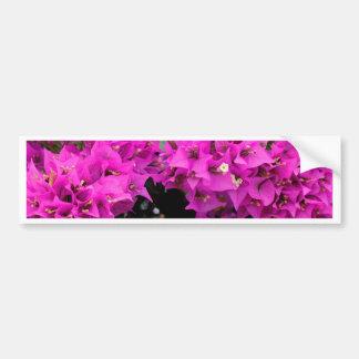 Pegatina Para Coche Fondo fucsia púrpura del Bougainvillea