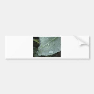 Pegatina Para Coche Gotas de agua en las hojas de la coliflor
