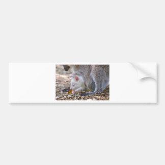 Pegatina Para Coche Joey del albino en el bolsillo