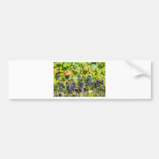 Pegatina Para Coche Manojos azules colgantes de la uva en viñedo